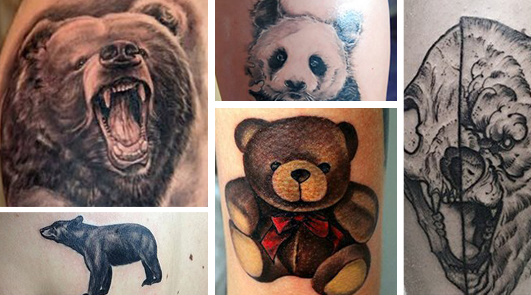 Bears are an increasingly rare yet undeniably beautiful animal. They live in different habitats all across the planet, and they are spiritually significant in many cultures throughout the world. In an...