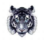 Siberian Tiger Tattoo Drawing